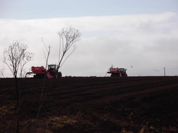 spud-sowing-pic-two
