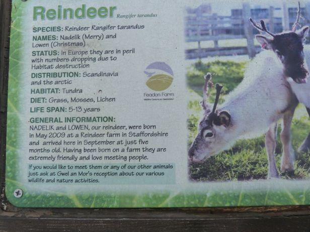 Tehidy pic 14 reindeer