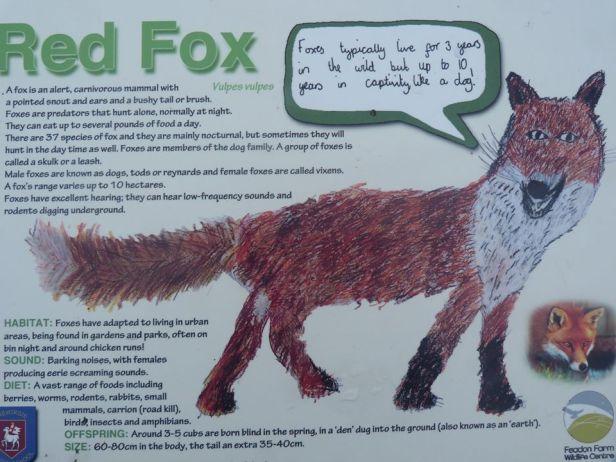 Tehidy pic 16 fox info