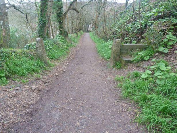 Tehidy pic 28 walk through the woods