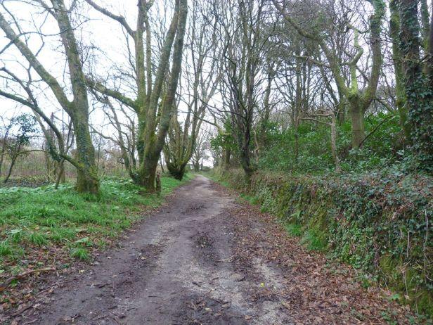 Tehidy pic 3 the path