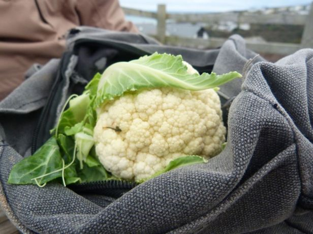 Tehidy pic 6 cauliflower